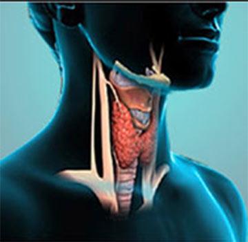 Thyroid Profile   Hemogram